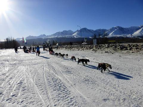 Silver Sled dogsled race Haines Junction, Mar 2015 b - photo credit - Elsabe Kloppers